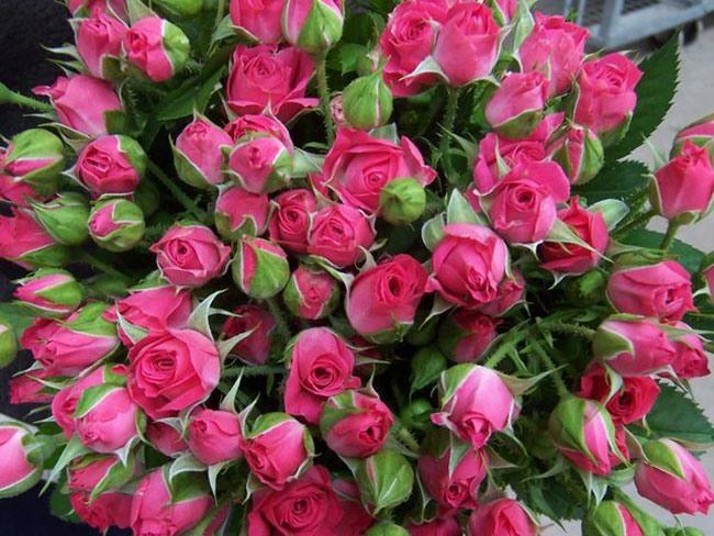 Мелкие розы букет фото