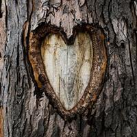 Лет деревянная свадьба поздравления