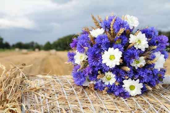 Какие цветы подарить на свадьбу фото 4